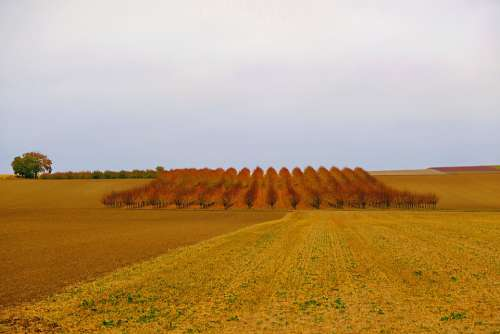 Autumn Fruit Trees Nature Wide Harvested Leaves