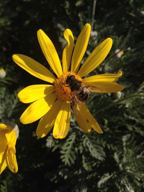 Bee Flowers Nature Yellow