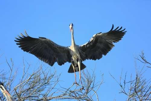 Bird Flight Pen Wing Beak Wild Plumage Freedom