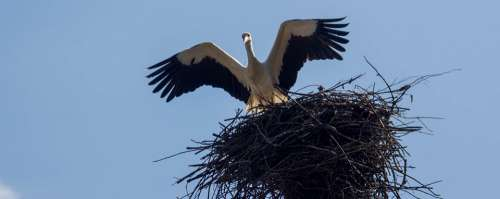 Bird Stork Jack Nature Spring Sky