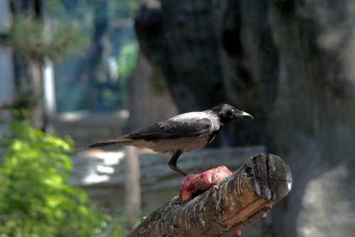 Bird Crow Zoo Wild World