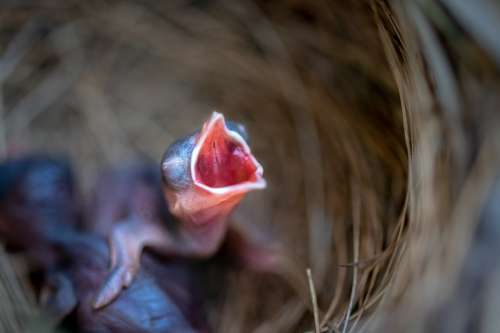 Bird Baby Animal Nature Feather Birth Wildlife