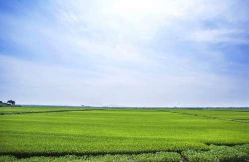 Boreas Rice Paddies Landscape Sky