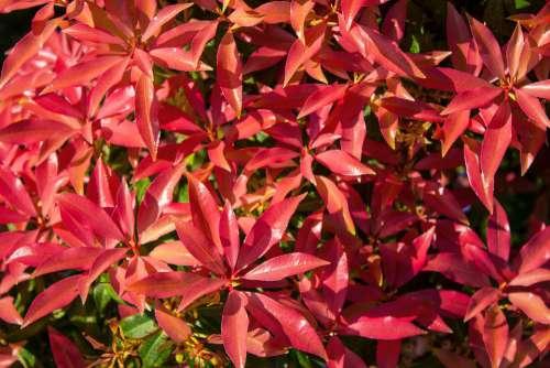 Bush Spring Garden Plant Nature Branch