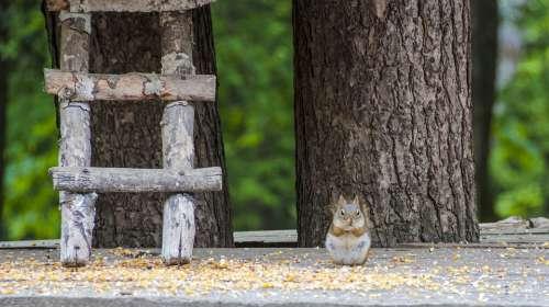 Canada Omega Park Fauna Squirrel Travel