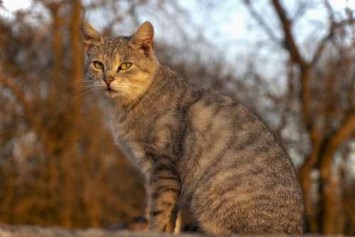 Cat Animal Home Playful Eyes