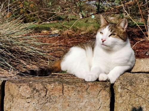 Cat Wall Nature Relaxed