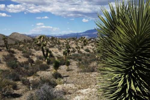 Desert Arid Cactus Dry Nevada Hot