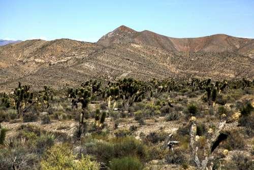 Desert Arid Cactus Mountain Dry Heat Summer