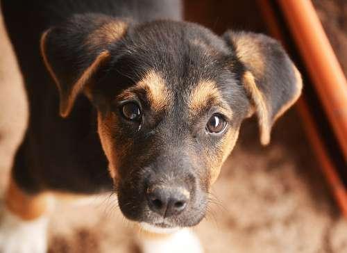 Dog Pets Puppy Animals Pet Cute Sweet Animal