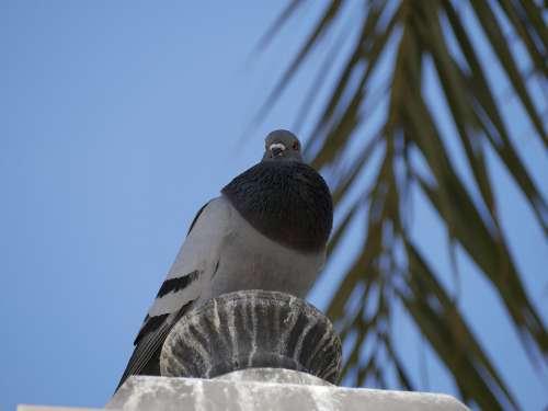 Dove Mallorca Palm Blue Sky Bird