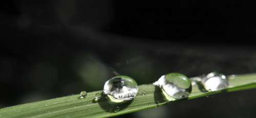 Drip Rain Water Wet Drop Of Water Nature Raindrop