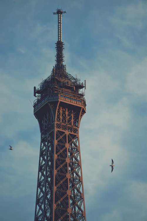 Eiffel Tower Great Birds Detail Architecture Paris