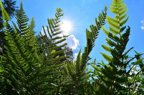 Ferns Plant Green Nature Sun Summer