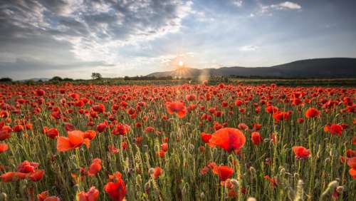 Field Of Poppies Sunset Nature Landscape Evening