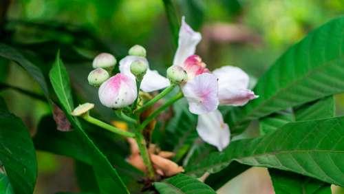 Flore Garden Plant Ornamental Plant Flower Nature