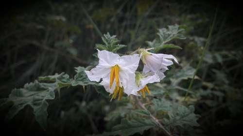 Flower White Flower Green Blossom