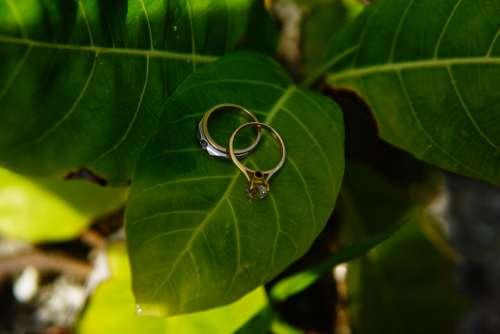 Flower Ring Wedding Love Nature Beautiful