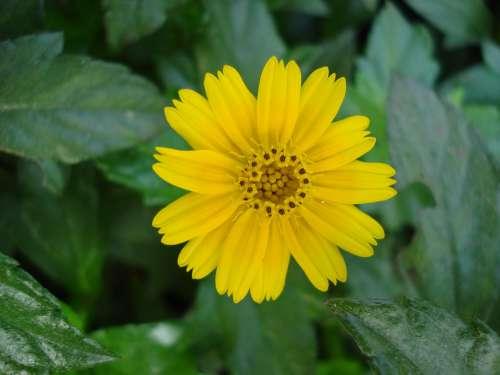 Flower Nature Blossom Bloom