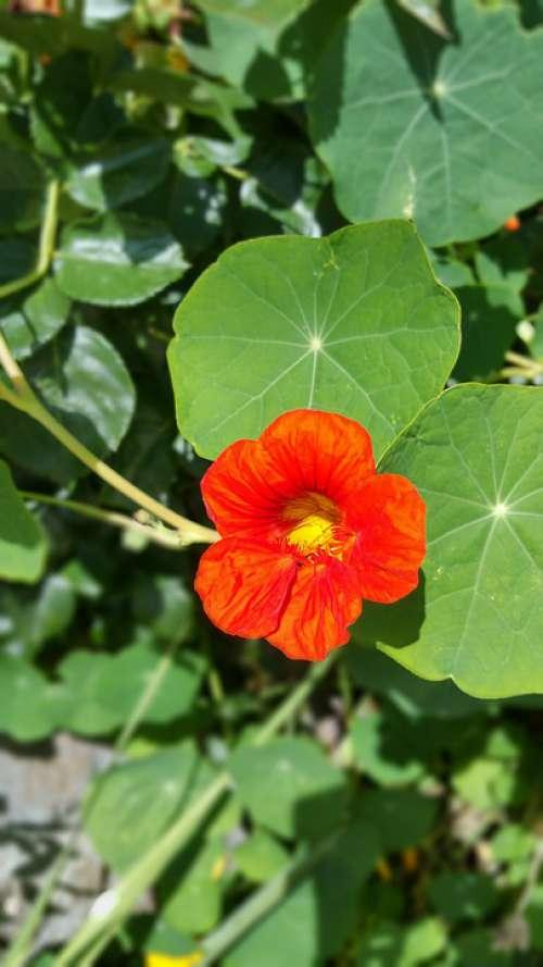 Flower Plant Spring Nature