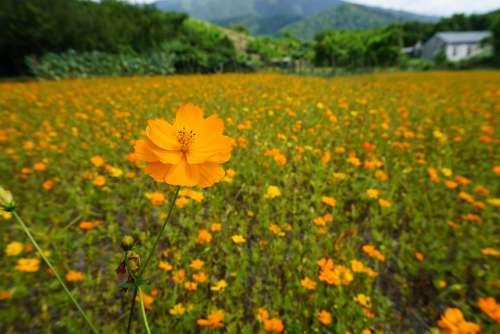 Flower Flowers In Full Bloom Garden Petal Natural