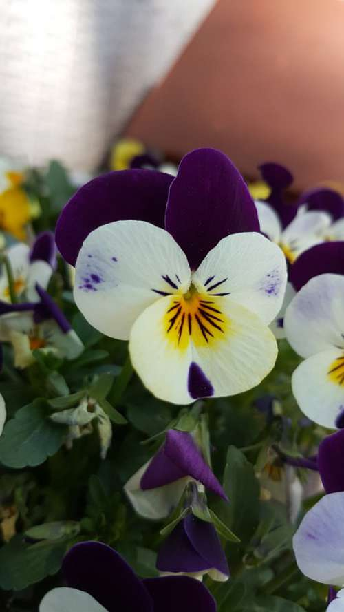 Flower Purple Nature Landscapes Scenery Beauty