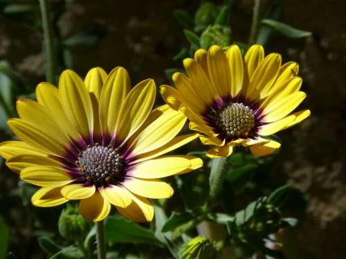 Flower Petals Yellow Flower Beauty