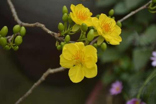 Flower Of Season Tree Nature