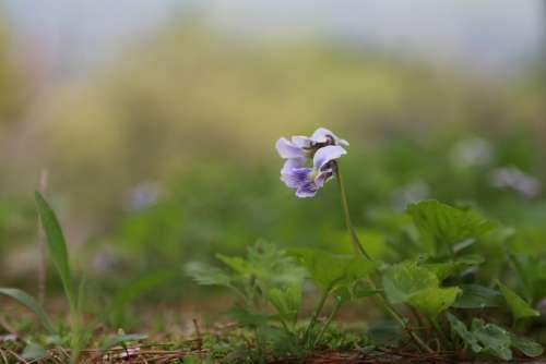 Flowers Wildflower Plants Nature Flowering Spring