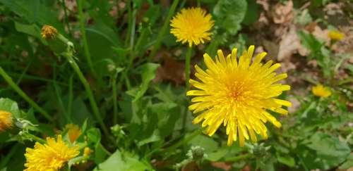 Flowers Yellow Blossom Nature