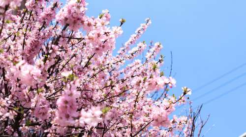 Flowers Spring Nature Pink Flora