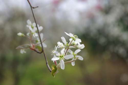 Flowers Wildflower Nature Plants Petal Leaf