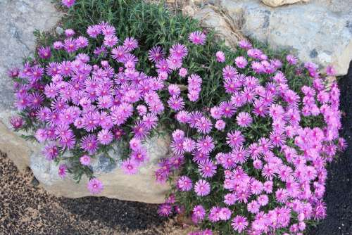 Flowers Flower Nature