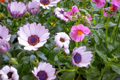 Flowers Flora Garden In The Garden Nature Spring