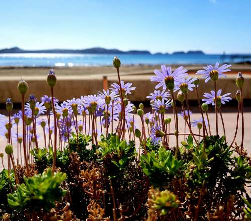 Flowers Beach Sea Weather Sun Vacations Promenade