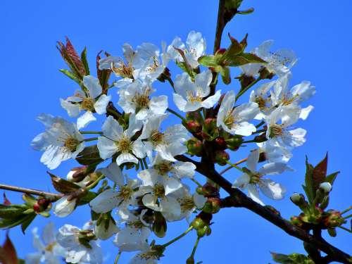 Flowers Spring Garden Nature Sky Tree Branch Sun