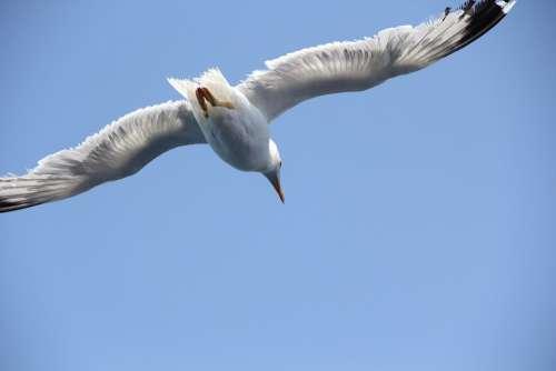 Fly Sky Flying Bird Animal