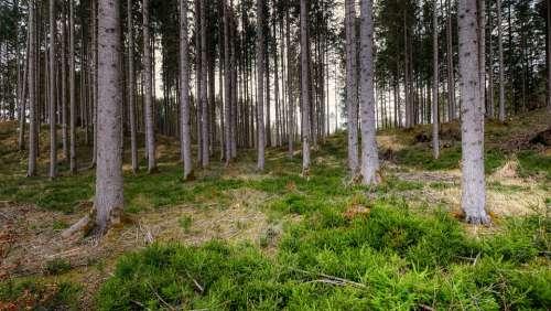 Forest Tree Nature Landscape Glade Mood Log