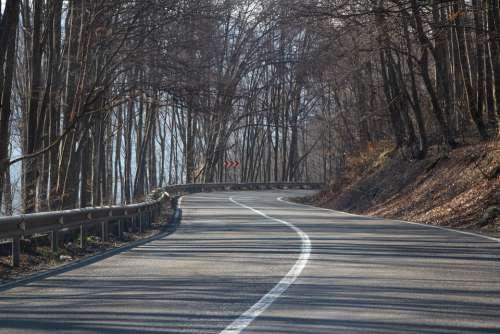 Forest Trees Nature Road Transylvania