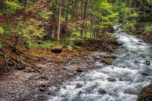 Forest Oberstdorf Bavaria Europe Scenic