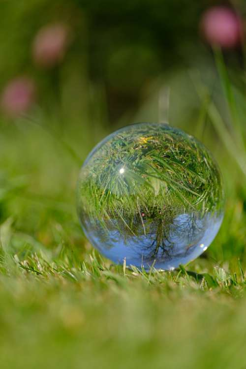 Frog Lily Glass Orb Photography Crystal Ball Grass
