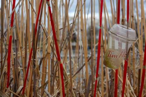 Garbage Plastic Beach Pollution Straws