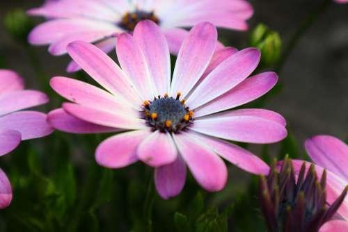 Garden Flower Plant Summer Pink Botany Spring