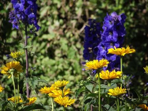 Garden Flowers Yellow Nature Blossom Bloom Summer