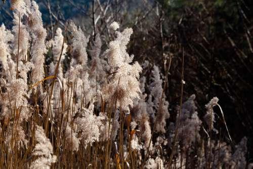 Grass Swamp Moor Nature Landscape Water Wetland
