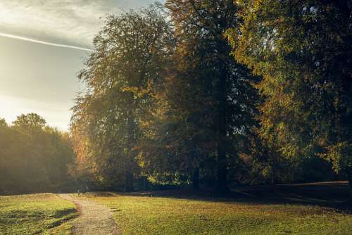 Hjort Deer Forest Autumn Golden Leaves Leaves