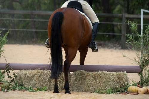 Horse Standardbred Hunter Show Jumper Refusal