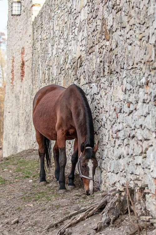 Horses Stallion Portrait Field Horse Spanish