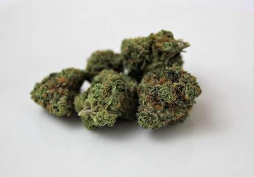 Indica Marijuana Weed Cannabis Pot