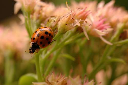 Ladybug Insect Bloom Plant Garden Flower Floral